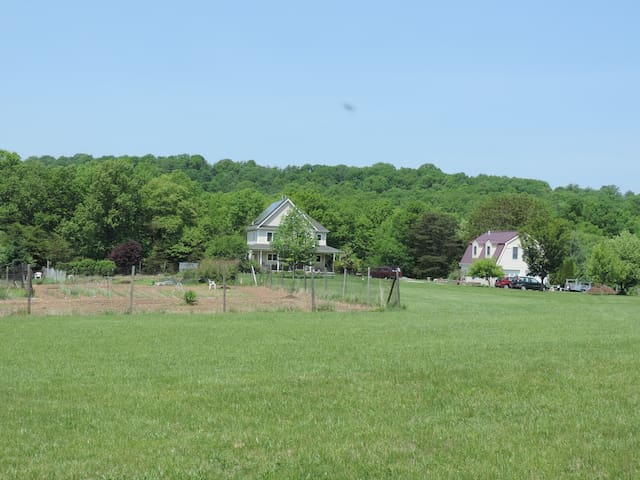 City Dog Farm