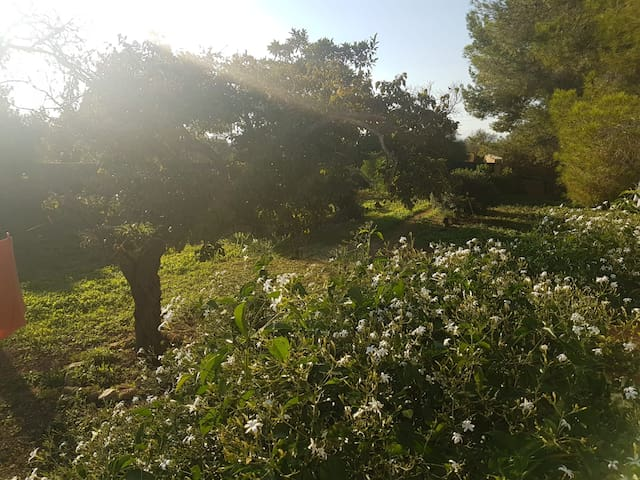 Habitaciones en entorno natural. Próximo a Palma.