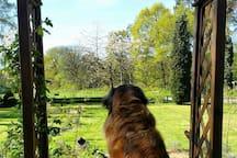 Unsere Leonbergerhündin Bruni genießt die Aussicht.