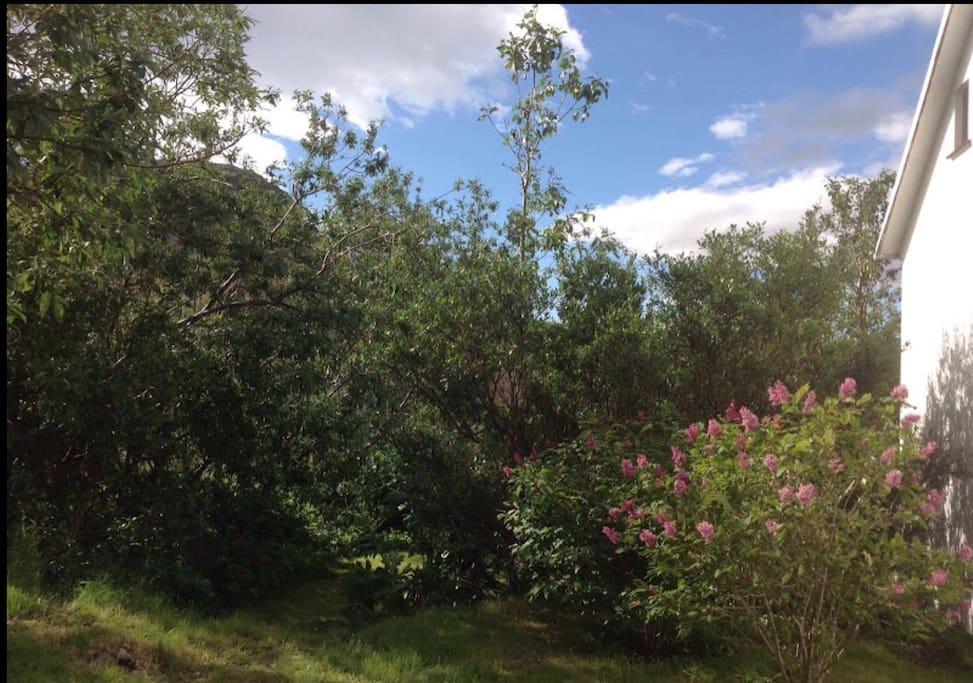 The garden- summer 2015