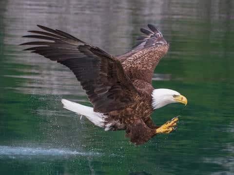 Eagle's Watch Cabin