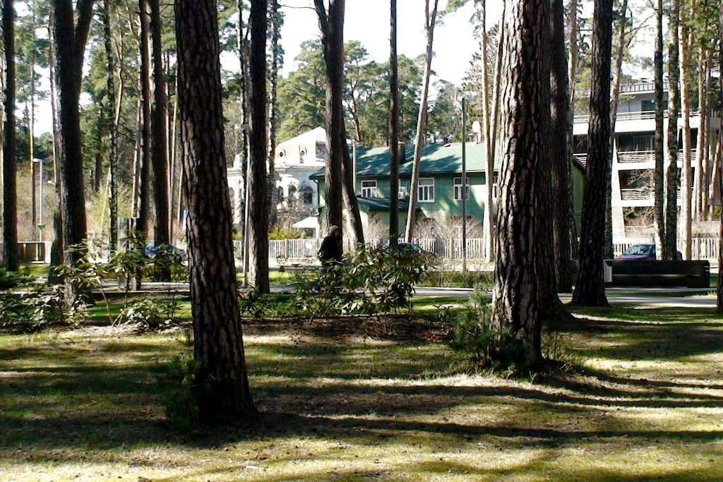вид на дом из парка