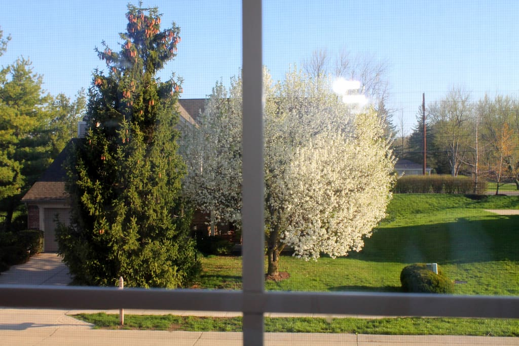 View from SugarPlum Room (Guest Room) in Spring