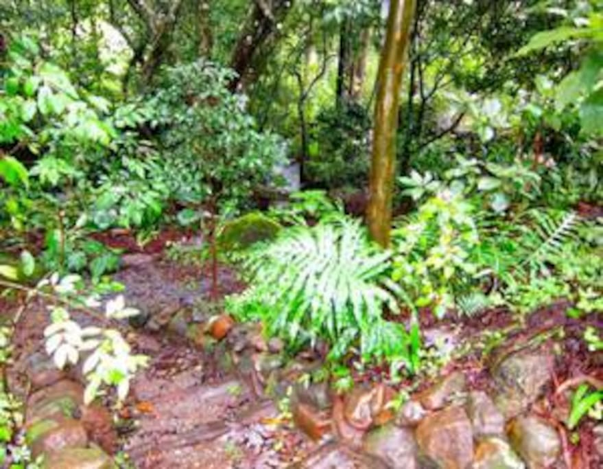 Small Jungle Park with Summer Creek and path