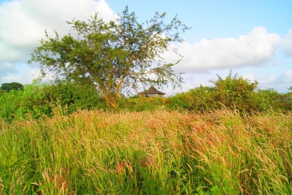 L'observatoire nichée dans la savane