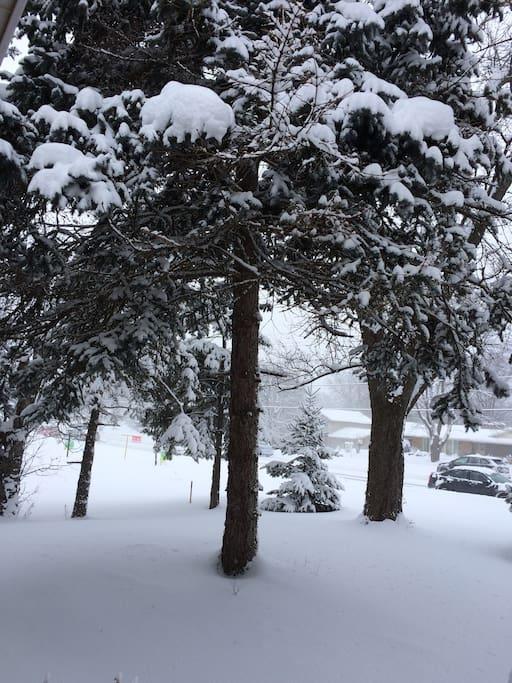 겨울의 앞마당