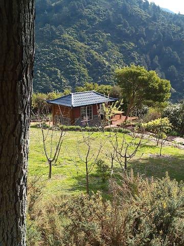 Mountain Sounds Heaven - Waikawa