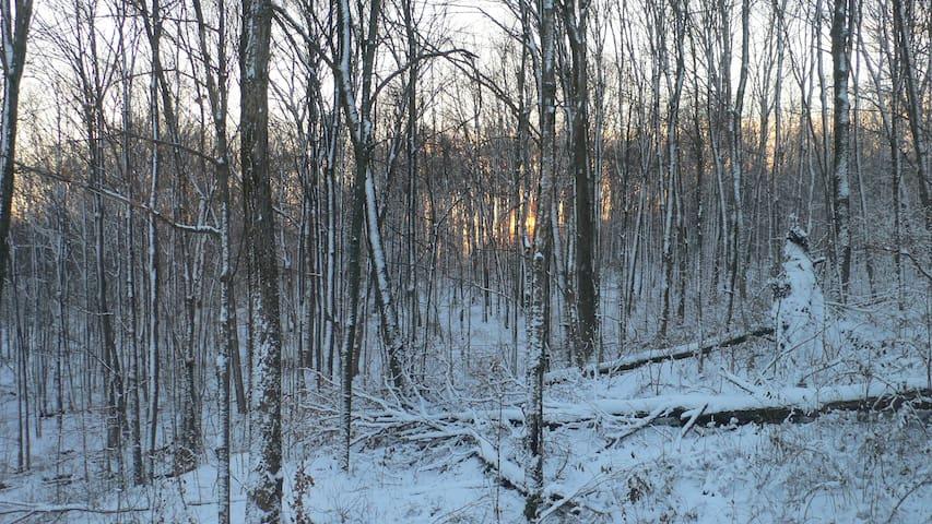 1st snow of the season: Nov. 2013