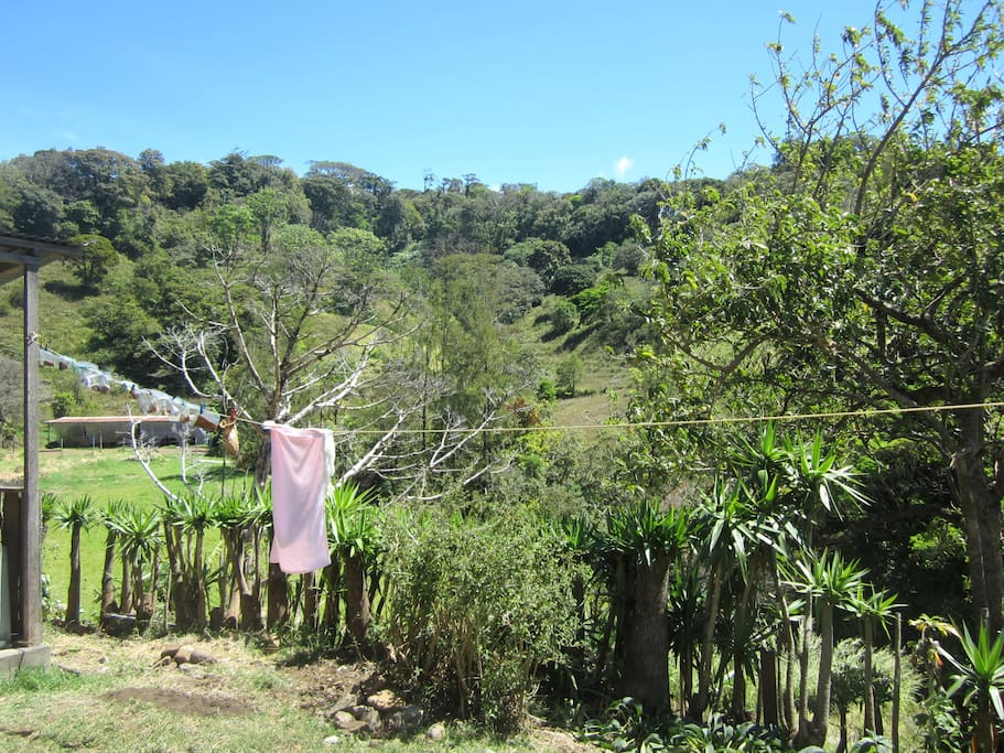The view of the valley from the backyard. You can see many beautiful birds here when our tree is fruiting. Woodpeckers, toucans, and parrots are all common.