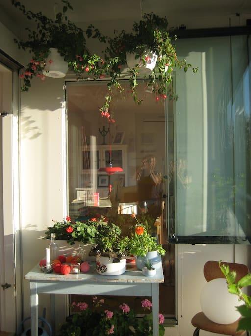 Hyggelig terrasse med en masse planter