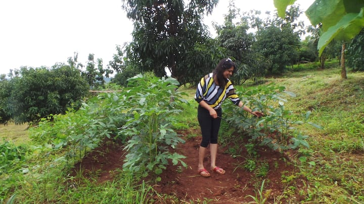 Checking on the lady finger (Okra) plant