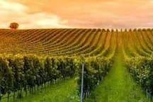 Colfosco vineyard