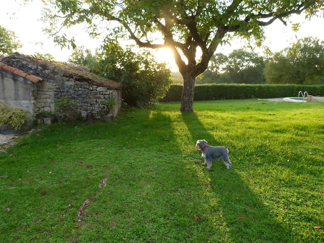 Gite garden (and our dog again!)