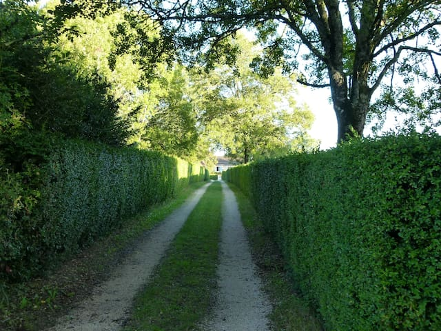 Drive down the 100m box hedge drive to the car parking area