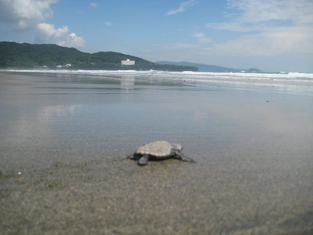 Best beach and ecofriendly  - Tosashimizu - Villa