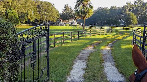 Experience Ocala's horse country and golden light