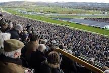 Cheltenhams grand race course.