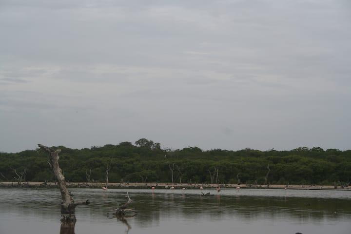 Campamento ambiental en Sisal Centro comunitario