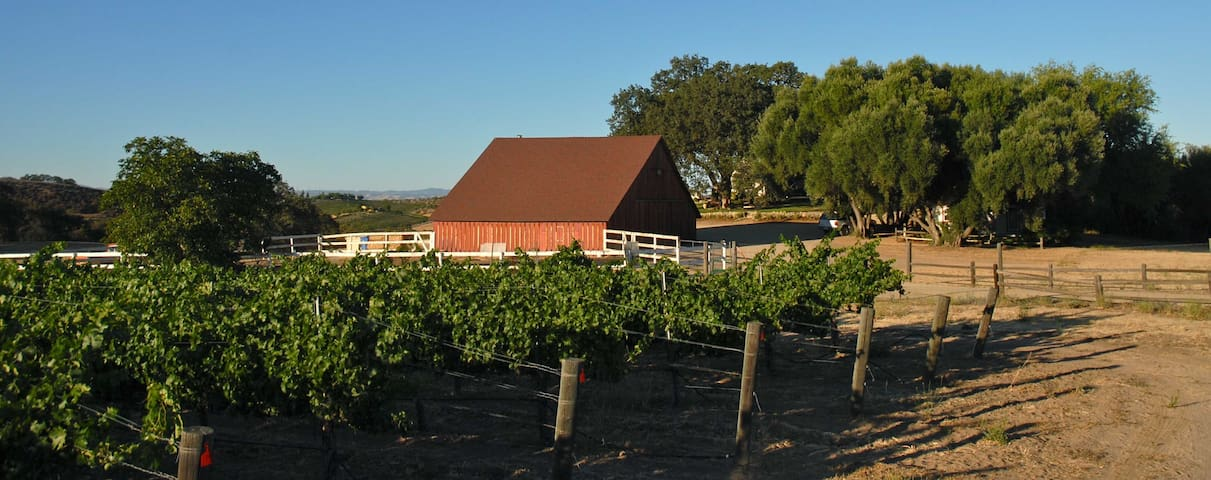 The vineyard lush during the summer growing season, your playground to stroll and learn