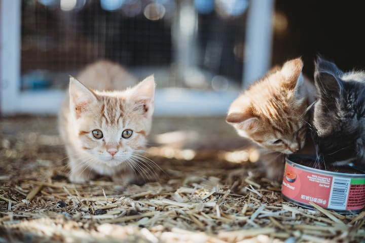 Hang out with our rescued cats and kittens in the Cat House.