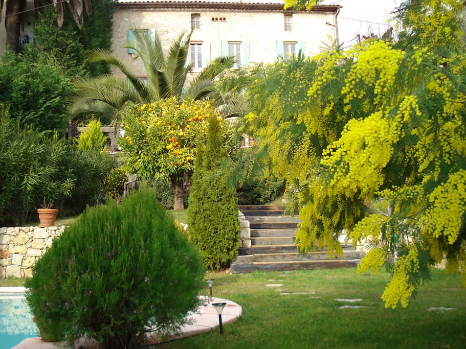Vue avec les mimosa en février / View in February with its mimosa flowering