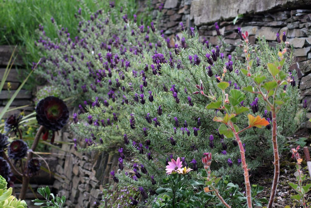Our beautful garden full of interesting plants and a haven for wildlife