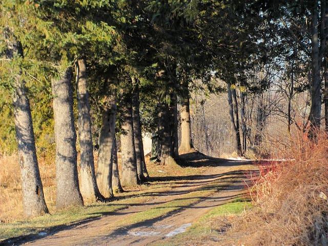 The farmhouse lane in spring.
