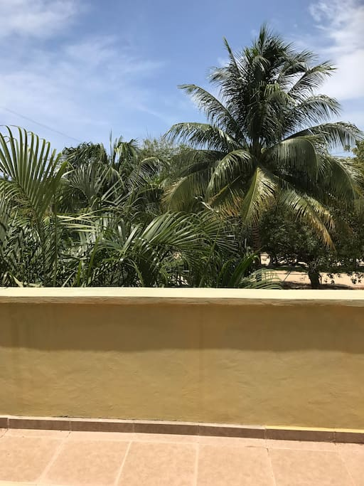 Palm trees & blue sky viewed from your suite and balcony. It is a short walk to the beach.