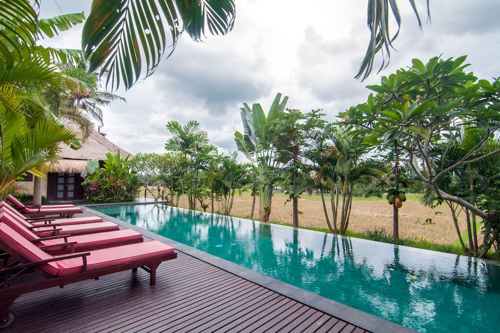 Bali Harmony Villas - Ubud - Our lovely infinity pool and view