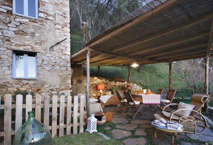 Casa in oliveto con vista mare - Camaiore