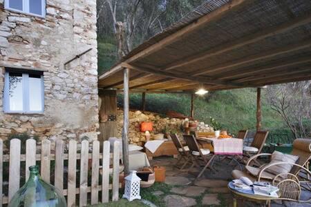 Casa in oliveto con vista mare - Camaiore - Rumah