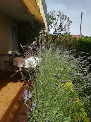 Terrace in front of  the house with lavender flowers