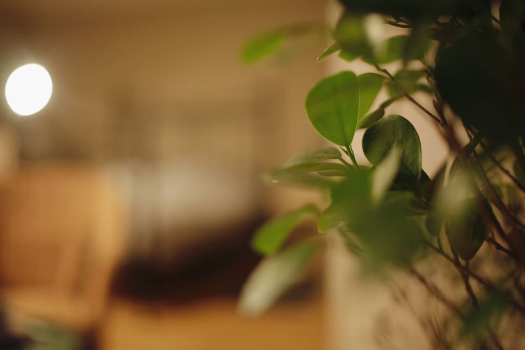 The room is filled with some great green plants, to feel more home.