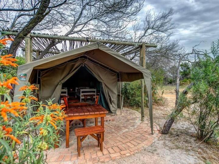 Honeyguide Standard Tent Room No. 5