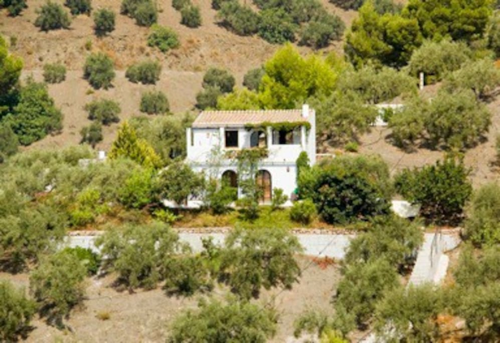 View of the cottage on the hill of olive trees