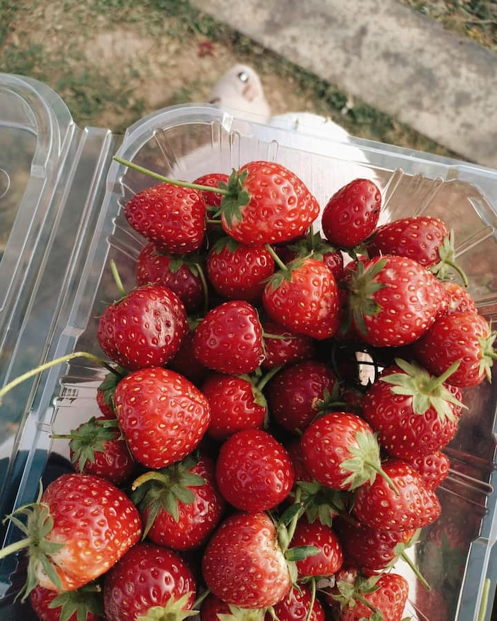Organic strawberry at Mon Cham