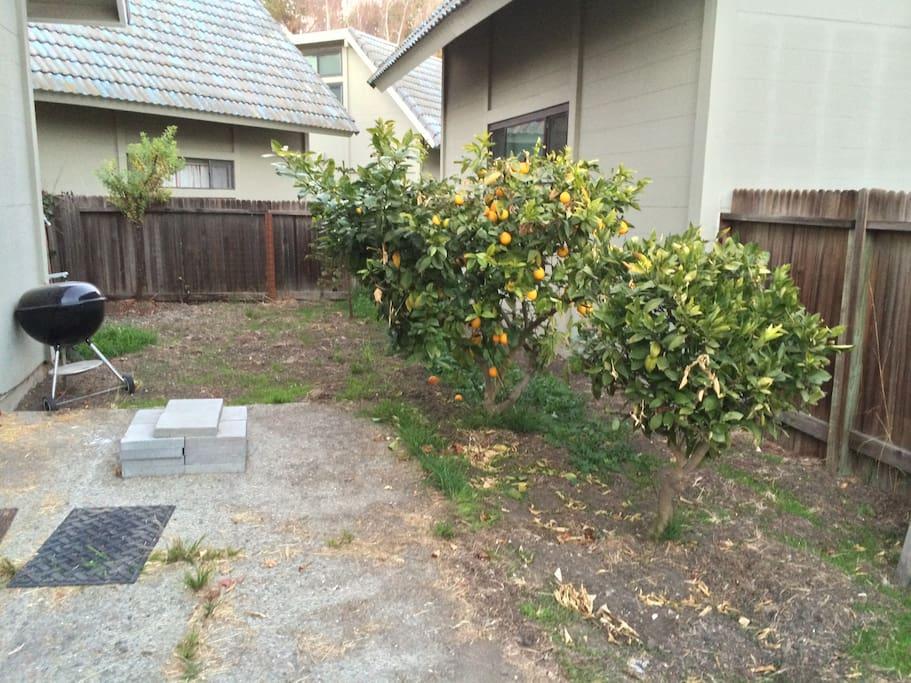 The yard has many citrus trees