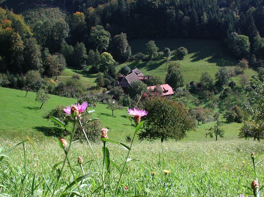 die idyllische Lages des Hofes
