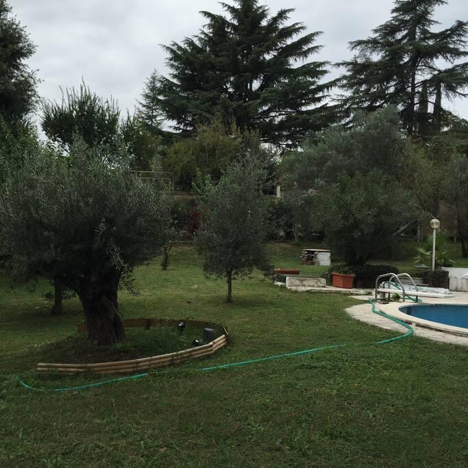 giardino posteriore piscina e ulivi secolari