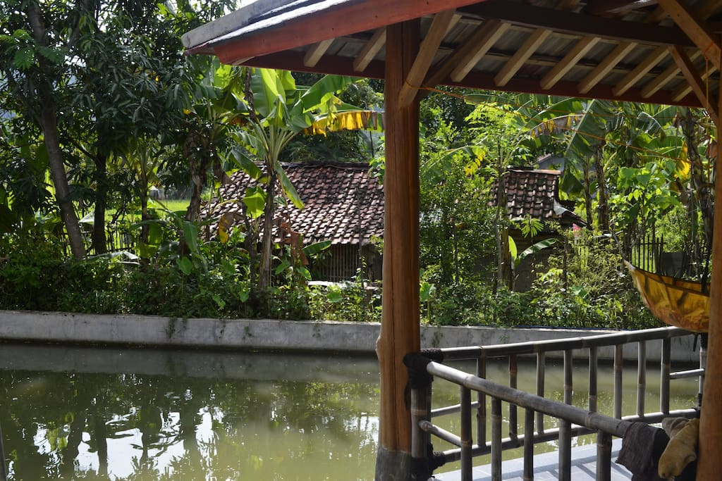 """our pond called """"balong"""""""