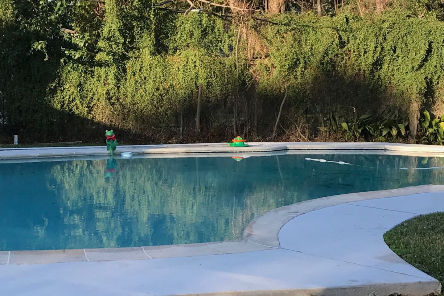 Extra Large Pool with diving board