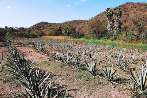 Rancho Guegorene—Tierra donde florece la tradición