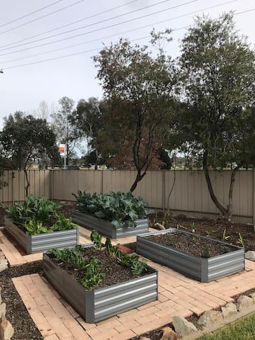 Our vegetable garden.