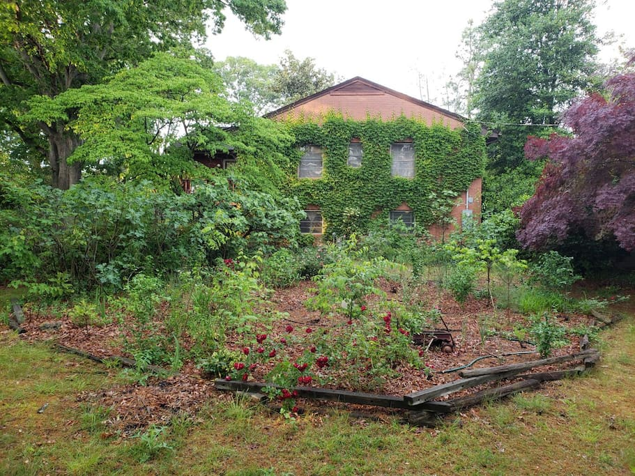 South side showing rose garden, fig, dogwood, and maple trees.