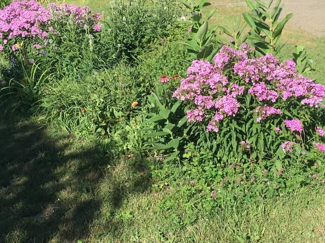 Some perennial gardens
