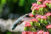 observe the Hummingbirds in our garden