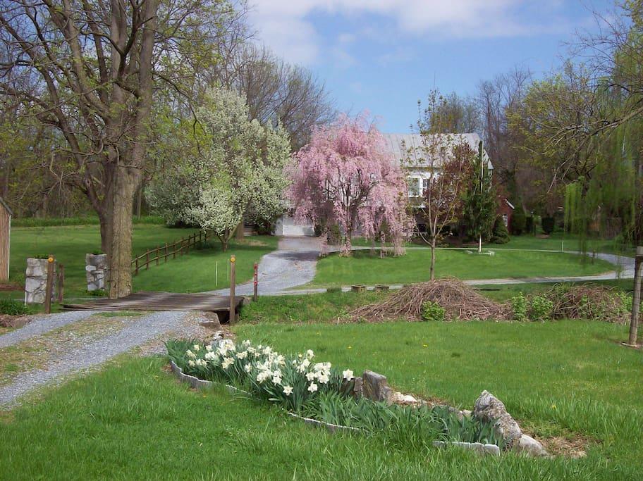 Spring at Fulling Mill
