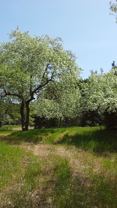 Spring blossoms to enjoy on your walking trails.