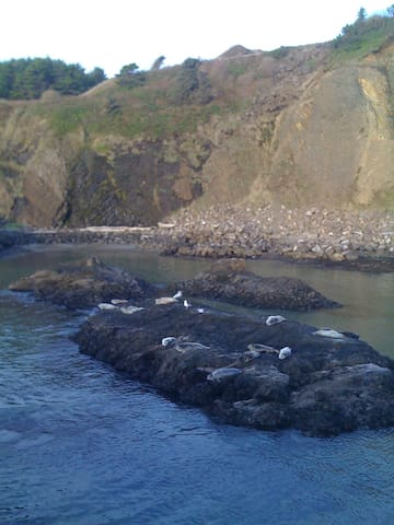 Seals at Quarry Cove