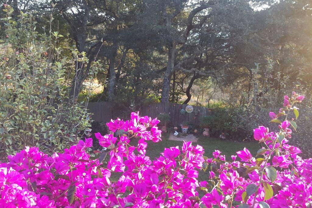 El jardín interior de la casa que nuestros invitados podrán disfrutar durante todo el año. Flores, colores y fauna de la sierra.